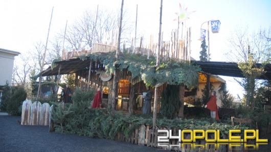 Żywa szopka w Opolu-Szczepanowicach czeka na odwiedzających