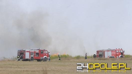 Strażacy apelują: Nie wypalajmy suchych traw