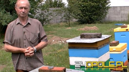 Ktoś wytruł blisko 3 miliony pszczół. Wcześniej pszczelarze dostawali groźby.