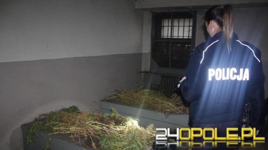 Prawie 17 kg marihuany i 90 krzewów konopi u mieszkańca Grodkowa
