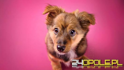 Wspomóż wydanie charytatywnego kalendarza z podopiecznymi Fundacji Fioletowy Pies