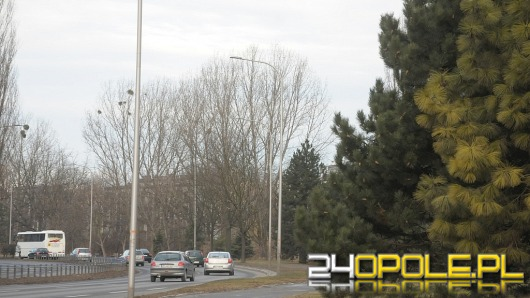 W Opolu zostanie zasadzonych blisko 3 tysiące drzew