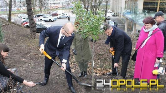 Politycy wzięli łopaty w dłonie i posadzili drzewa