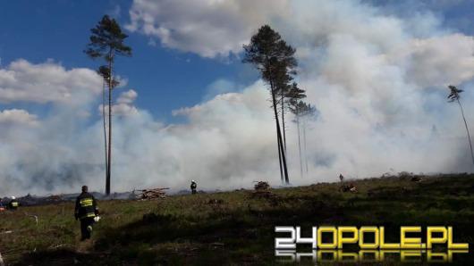 Strażacy walczą z pożarem lasu pod Szumiradem