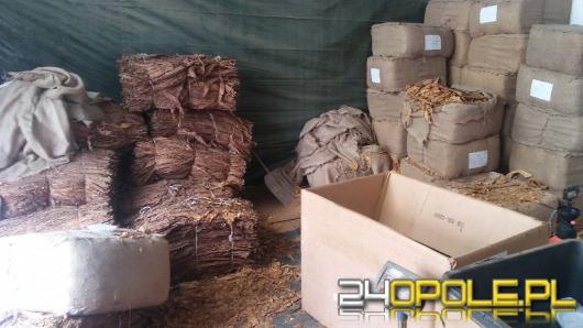 Produkowali nielegalny tytoń, wpadli w Kędzierzynie-Koźlu