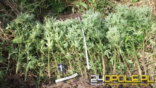 Marihuanę uprawiał na działce, amfetaminę trzymał w narożniku