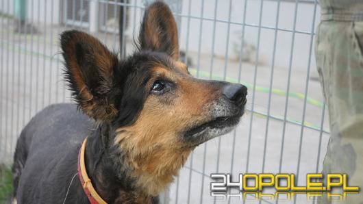 Opolskie schronisko apeluje o adopcję starszych psów i kotów