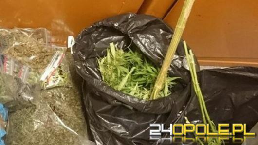 Policjanci zlikwidowali plantację marihuany - 5 osób usłyszało zarzuty