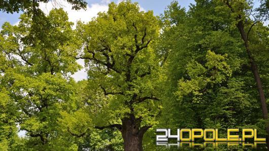 Kochasz drzewa? Weź udział w konkursie!
