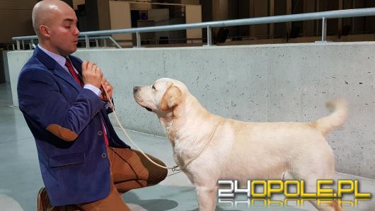 Najpiękniejszy pies Opolszczyzny wybrany