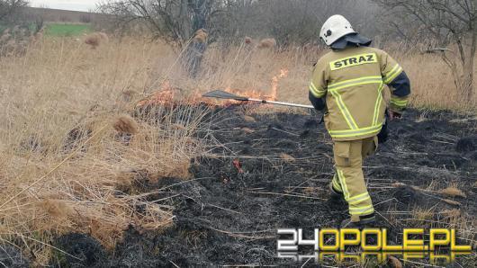 Ktoś podpala nieużytki w Polskiej Cerekwi. Strażacy mają dość