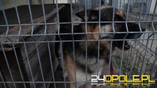 Nawet 100 tys. zł grzywny i 5 lat więzienia za znęcanie się nad zwierzętami