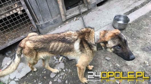 Kolejna interwencja TOZ-u w Rudnikach, jednego z dwóch psów nie udało się uratować