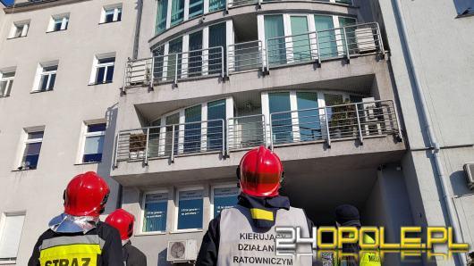 Niecodzienna interwencja strażaków w Opolu. Zostali wezwani do....gołębia