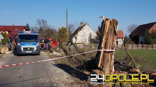 50-latek zmarł przygnieciony przez drzewo. Pracował przy wycince