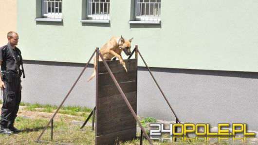 Najlepszy przewodnik psa służbowego na Opolszczyźnie i jego partner Hura