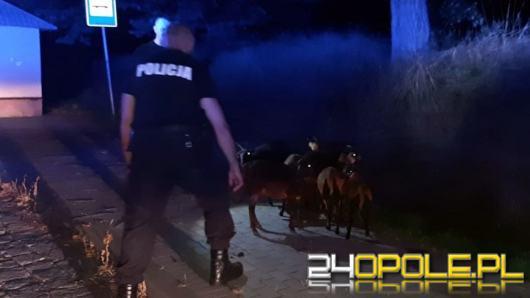 Nietypowa interwencja policjantów z Prudnika....łapali kozy