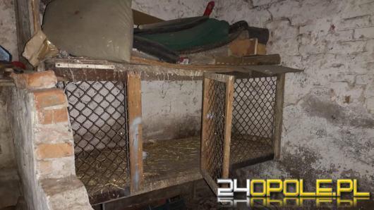 Pies zamknięty w klatce po królikach w chlewie. Interwencja TOZ w gminie Wołczyn.