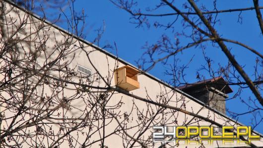 60 budek lęgowych dla pustułek zamontowano na budynkach w Opolu