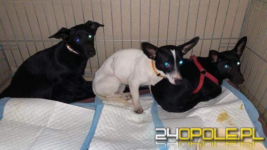 """9 psów żyło we własnych odchodach. Właściciele """"nie czuli"""""""