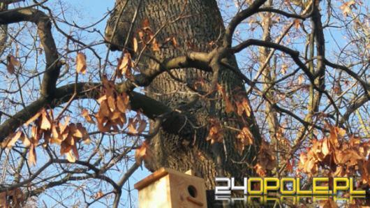 Miasto dba o małe drapieżniki i ptactwo w Opolu