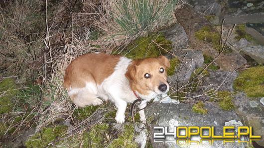 Psa przywiązali do kamienia łańcuchem i odjechali
