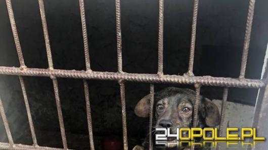 Kochająca właścicielka trzymała psy w klatkach pełnych odchodów. Odebrano 2 psy