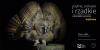 """Wystawa: """"Piękne, ciekawe i rzadkie - sowy w obiektywach opolskich miłośników przyrody"""""""