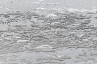 Morsowanie na Kąpielisku Bolko  - 8458_morsowanie_24opole_123.jpg