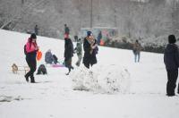 Opolanie ruszyli na sanki do parku na osiedlu Armii Krajowej  - 8573_zima_24opole_0002.jpg