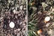 Mięso z pinezkami rozrzucone w Niemodlinie. Uważajcie na swoje pupile - 20210226071845_fb_img_1614320072797_0.jpg