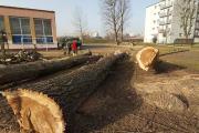 Wycinka drzew przy Liceum nr 1 w Opolu. Przeszkadzały w budowie boiska - 20210226141937_153783686_3570427o_1_0.jpg