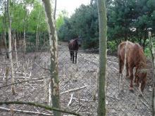 Głodne zwierzęta zjadły część drzew na swoim wybiegu.<i>(Fot: czytelnik)</i>