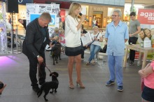 Anna Guzik namawiała do odpowiedzialnej adopcji zwierząt