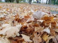 Jesienne liście - grabić czy nie grabić?