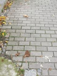 Zalegające na chodniku odchody obrzydzają mieszkańców ul. Bonczyka