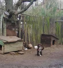 Odebrano mu psy, bo o nie nie dbał, więc znalazł nowego na łańcuch