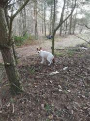 Pies przywiązany do drzewa w lesie. Interwencja w Strzelcach Opolskich