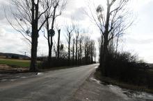 """180 drzew do wycięcia kosztem ścieżki rowerowej. MZD zakłada, że """"uratuje ich jak najwięcej"""""""