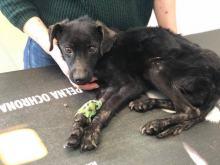 Młody pies był przywiązany do drzewa nad rzeką. Interweniowały wolontariuszki TOZ