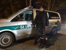 Pies Hunter wykrył narkotyki na posesji i w pojeździe. Zatrzymano dwóch mężczyzn