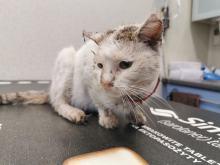 Właściciele widzieli, że kot cierpi. Dopiero po interwencji TOZ trafił do weterynarza