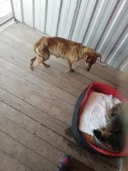 Skrajnie zaniedbane psy i szczeniaki pod Wołczynem. Udało się je uratować, ale teraz szukają domu