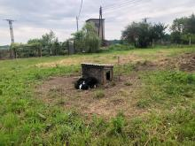 Suczka z młodymi przywiązana do budy na środku pola. Interwencja TOZ