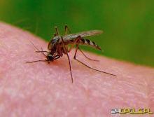 Plaga komarów to koszmar. W Opolu ciężko spokojnie spacerować