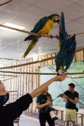 Papugi przyleciały do Opola