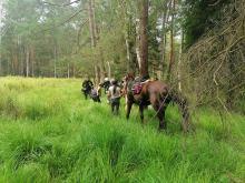 Strażacy pomogli koniowi, który ugrzązł w błocie