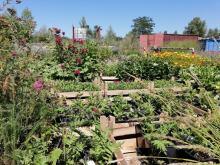 Mobilne łąki lekarstwem na beton? Coraz więcej kwiatów w centrum miasta