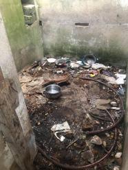 Pies był trzymany w komórce - wśród śmieci, odchodów i szkła