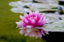 Oczko wodne - plusy i minusy dekoracji ogrodowej